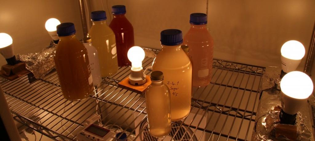 光合成細菌の培養