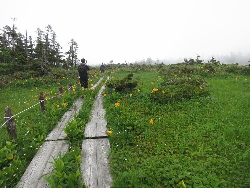 2015.07.21八幡平頂上付近の高層湿原での泥炭採取地点の予備調査