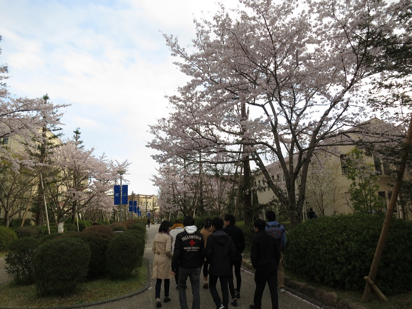 2019.4.12 KSCキャンパス周辺の桜散策